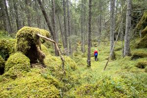 Foto: Foto: Gorm Kallestad/NTB scanpix/TT