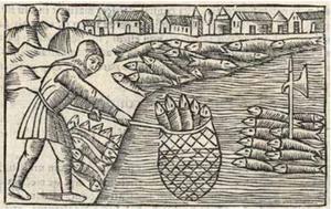 Sillfänge, Olaus Magnus. Träsnitt från 1555.