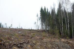 Inget som signaturen gillar. Röstberget i Funäsdalen är på väg att bli ett kalhygge.