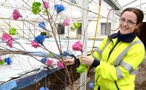 Parkingenjör Sara Jaderyd visar upp påskrisen som Anna Aronsson gjort i ordning för de centrala delarna av Falun. Foto: Falu kommun