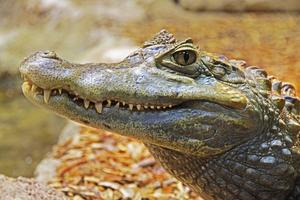 Skall vi nu ömma för alla de företagare som gråter krokodiltårar, kanske vi skall fundera över hur solidarisk vi skall vara med dem som kämpar för sin dagliga överlevnad, funderar insändaren. Foto: Jeff Leonhardt från Pixabay