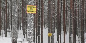 """""""Vi kräver att regering och riksdag tar ansvar för vår skog – innan fler värdefulla skogar huggs"""", skriver debattörerna.  Arkivfoto: Klockar Mattias Nääs"""