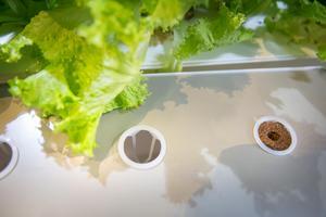 Ovanifrån är lådan sluten med hjälp av ett lock med hål  och en korginsats där man stoppar ner torvpluggen. Det finns både färdiga torvpluggar med frö och tomma där man själv kan välja vad man vill odla, fröet läggs då i hålet i mitten på pluggen.