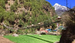 början av vandringen korsade de tjejerna floder på hängbroar. Foto: Privat