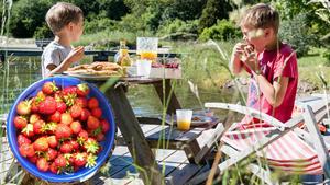 En picknick eller jordgubbsplockning hör till Länsstyrelsens tips på billiga och klimatsmarta aktiviteter som man kan göra med barnen under sommaren.