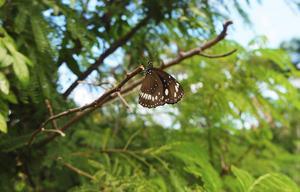 I det tropiska klimatet återfinns många vackra djur och insekter.