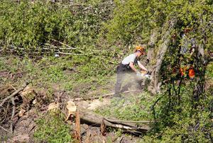 Röjningen i bäckravinen väckte känslor men Ewa Lindstrand menar att det var boende som ville att träden skulle fällas.