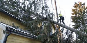 Stormen Alfrida drabbade Väddö hårt, är föll ett träd över ett hus i Skeppsmyra.