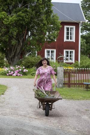I början av sommaren blommar pionerna som vackrast på gården. Det är mycket att sköta och rensa i den stora trädgården.