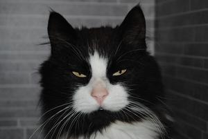 Min underbara Katt Junior.