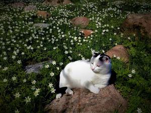 Andrapriset i NT:s vårbildstävling! Så här skriver Richard Lundstedt om våren och sin bild:  Glädje - det blir dels ljusare och det är mer liv ute och värmen börjar krypa sig tillbaka och är på lagom nivå. Våren är den bästa årstiden enligt mig. Bilden är tagen i Häverö - utanför Hallstavik. Foto: Richard Lundstedt