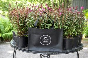 De har tänkt till med det hållbara, väskor och växterna är till 90 procent fleråriga, inte några