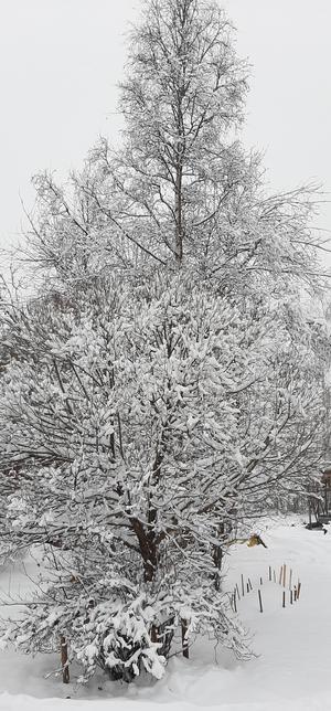 Vinterbuskar och träd i olika modeller.