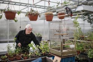 Vissa kunder vill ha sina pelargoner omplanterade.