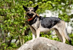 Med lite enkla åtgärder blir hundlivet mer spännande. Foto: Erik Mårtensson/Scanpix