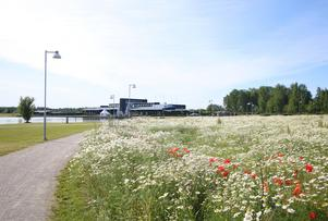 Den sådda ängsmarken växte fram vid Kumla Sjöpark. Ett långsiktigt projekt i Kumla kommun som började lite smått redan i somras.