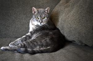 Det kan bli onödigt dyrt att bota husdjur. Katten på bilden är inte den som förekommer i artikeln.