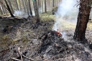 Svenska kyrkan förvaltar mycket skogsmark och borde därför vara bättre förberedda på eventuella framtida kriser, anser insändaren.