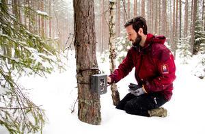 Daniel Mallwitz vittjar en viltkamera under varginventering utanför Fagersta i februari 2015.