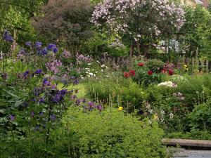 Sundsvall förtätas allt mer, ibland på bekostnad av gröna ytor. Som kompensation bör Sundsvallsborna få en vacker park för skönhetsupplevelser och kontemplation, skriver Annicka Burman. Bilden är från insändarskribentens trädgård. Foto: Privat