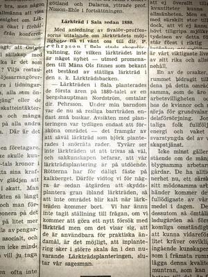Ur SA den 12 mars 1943. För den som sett att det här och var finns granar bland lärkträden kommer förklaringen här.