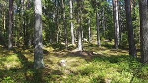 Foto: Länsstyrelsen Västmanlands län  Grisnäs i Skinnskatteberg är ett av tre nya naturreservat i Västmanland.