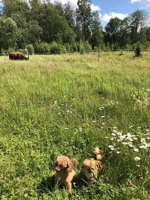 Hulda och Selma firar midsommar vid sommarstugan Rusbodarna i Dalarna. Foto: Annika Törnkvist