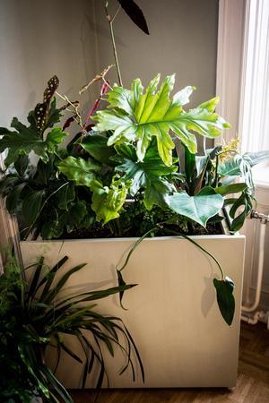 Lina och Gustav gillar att samplantera växter.