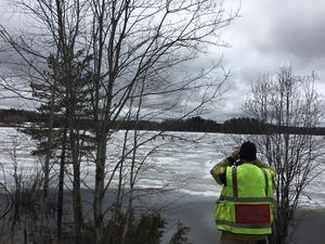 Djurräddning av älg i Bölesjön.