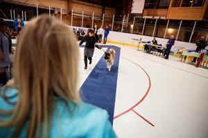 Ann-Christine springer längs en blå matta med Holder. I den blurriga förgrunden bevakar en av domarna noggrant händelseförloppet.