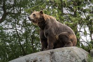 Förmodligen har flera björnar sett Ida Ingemarsdotter under hennes träningspass i skogen utan att hon märkt av dem.