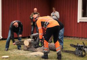 När Bosse Gustafsson och Peter Dagman hanterat den 40 kilo tunga Archimedesmotorsågen och kapat aspstocken var Skogsmuseet i Daretorp återinvigt. Foto: Anna Dagman.