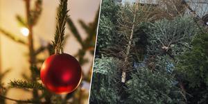 Nu kan Ludvikas julgranar bli till fjärrvärme. Bilden är ett montage.