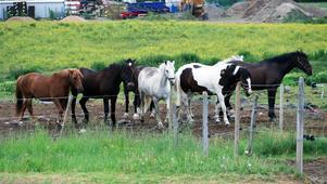 Hästarnas hage har blivit allt mer inklämd under årens lopp. Ridklubbens anläggning ligger egentligen på industrimark.