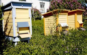 Galina använder trågkupor där lådor med ramar är staplade inuti ett litet hus.
