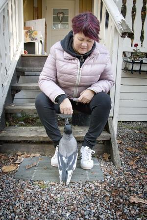 Kine är noga med att kråkan inte får komma inomhus, dels vill hon inte att den ska vara tam, dels gillar den att ta saker.