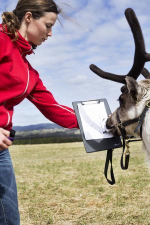 – I stort sett alla levande organismer går att träna med en klicker, hävdar Ullis.