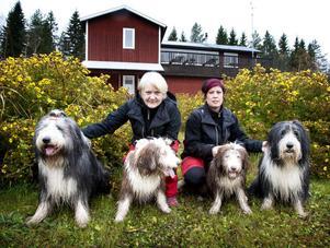 Rose-Marie Gomersson och Chrissie Omsdotter med sina egna fyra glada hundar, alla av rasen bearded collie.