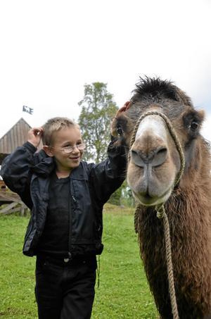 Närkontakt. Henrik Ridde, 7 år, gosar med kamelen Karlsson, 3,5 år.