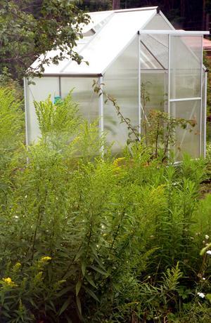 VIKTIGT.  Lagom temperatur och bra ventilation i växthuset gör att växterna blir friskare.