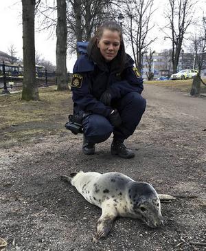 Polisassistenten Charlotta fick hjälpa en sälkut på vift i centrala Gävle.