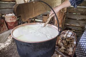 För att göra ost tillsätter man ostlöpe i mjölken. Här har mjölken har löpt och Marika skär ett kryss i massan.