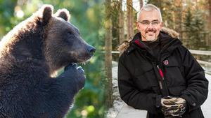 Benny Gäfvert berättar vad du ska göra om du möter björn i skogen.