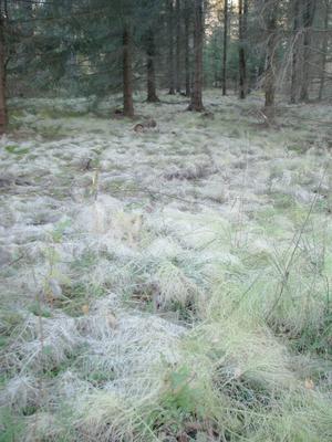 Gäddeholm, grädet har