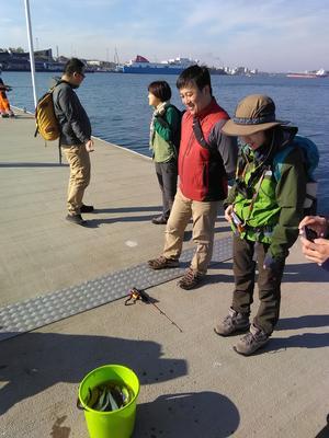 Besökarna på promenad på piren i hamnen fick träffa Hampus som fiskade strömming.