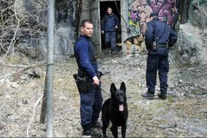 Hundpatrullerna som var i Östersund för att öva fick igår rycka ut på skarpt uppdrag när ett pågående inbrott skulle undersökas.