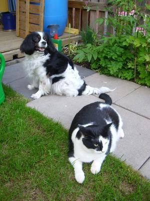 Hunden Lady Och Katten Busan ,lika som bär och är bra vänner.