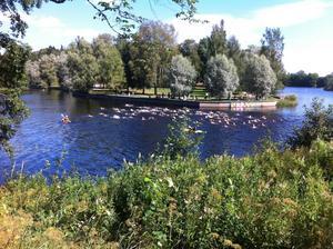 I förra årets upplaga av Gävle Triathlon var 117 personer anmälda.