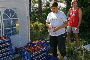 Sommarjobb. Under sommaren juli månad arbetar 13 ungdomar som jordgubbsplockare i Ulvsta. Utan sommarjobbarna skulle Ingemar Hammarlund inte hinna skörda jordgubbarna. Viktor Landström är en av dem.