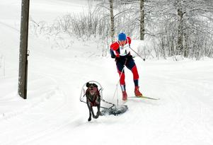 Kalle Wegerfelt i Hällefors Brukshundklubb hejar på sin hund i draghundstävlingen som hölls vid Hurtigtorpet.